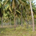Land for sale in Bang Saphan Noi Thailand