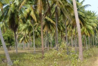 Land for sale in Bang Saphan Noi Thailand