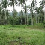 Land Coconut Maenam Soi 2