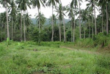 Land Coconut Maenam Soi 2