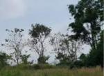 land-thamrong